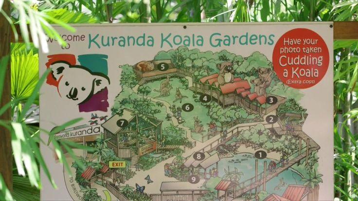 Koala Gardens Kuranda 2015 (near Cairns, Queensland)