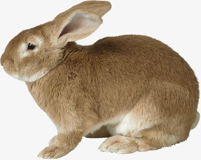 Rabbit Rabbit Pictures Animals Rabbit