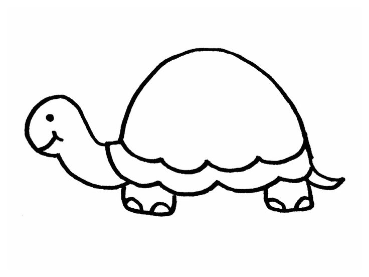 Turtle Outline To Art Ideas Pinterest Turtles