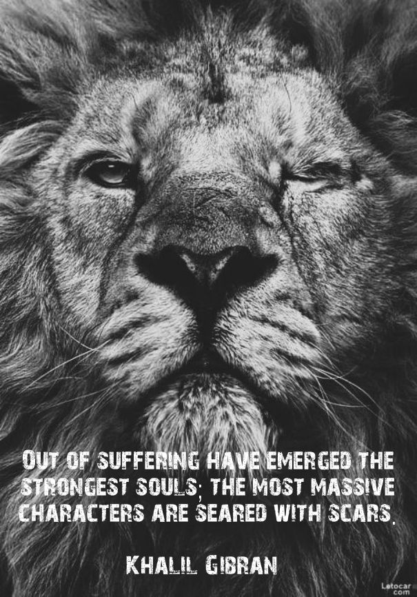 Lion Quotes And Sayings Out of sufferin...