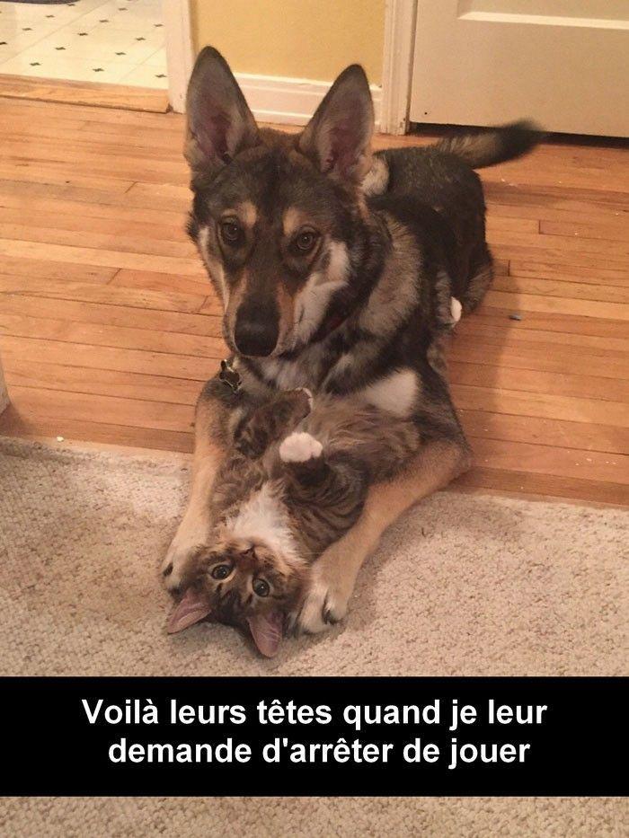 Top 30 Des Snapchats Danimaux Les Plus Droles Memes Jokes
