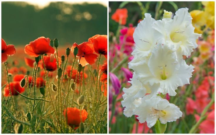 Do you know your Birth Month Flower and its meaning