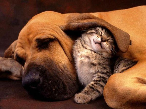 ungewöhnliche tierfreundschaften schläfrig und süß