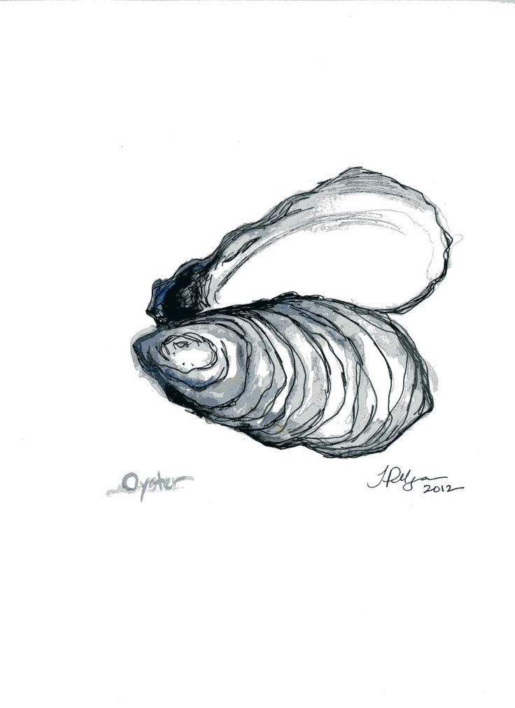 oyster drawing  inspo for tattoo with  u0026quot curiosity often