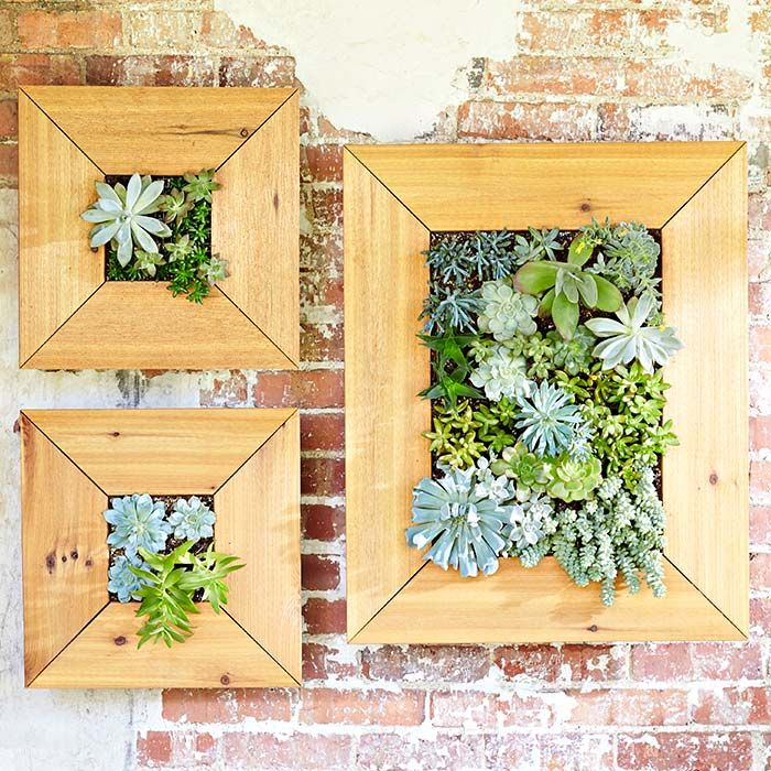 build a space saving planter that turns succulent plants With kitchen cabinets lowes with framed succulent wall art