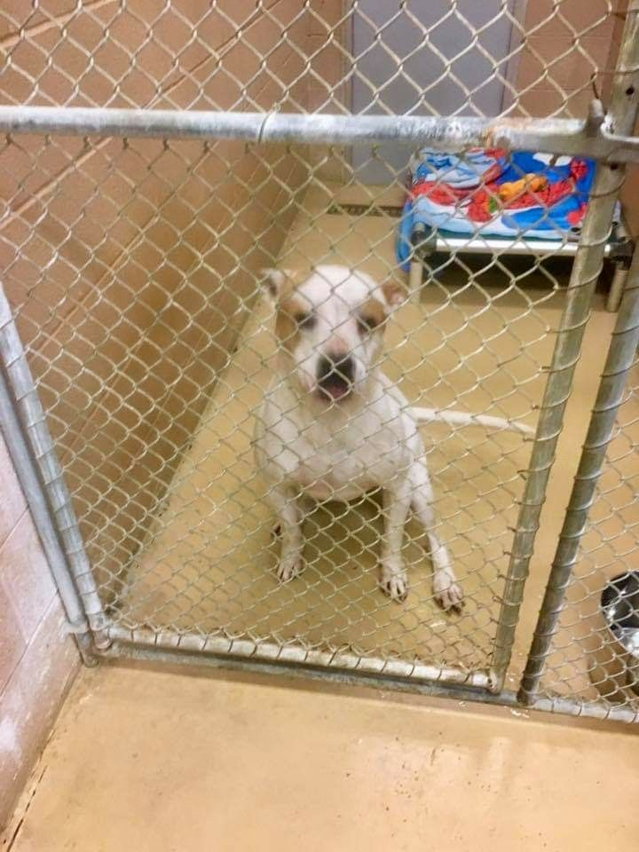1 5 19 Shelter Name Cherokee Neutered Male Jumped In Blount