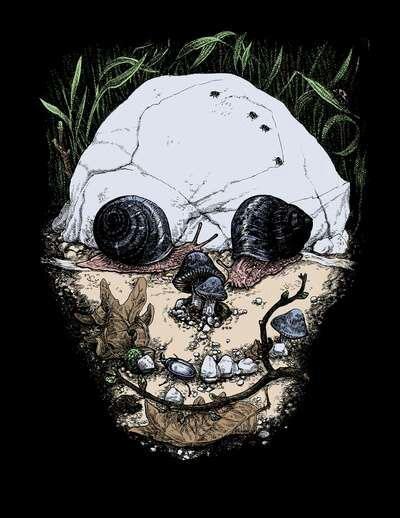 optical illusions skull
