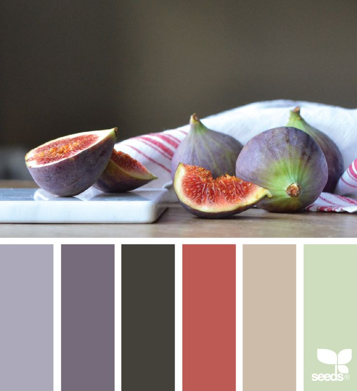 Color slice from figs  - www.homeology.co.za