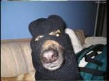 guerra dog 4