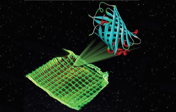 Proteínas bioluminiscentes dan color a pantallas ecológicas y baratas