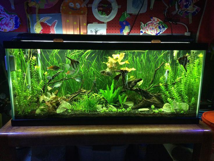 5 aquarium plants for beginners jungle val dwarf lily for Beginner fish tank