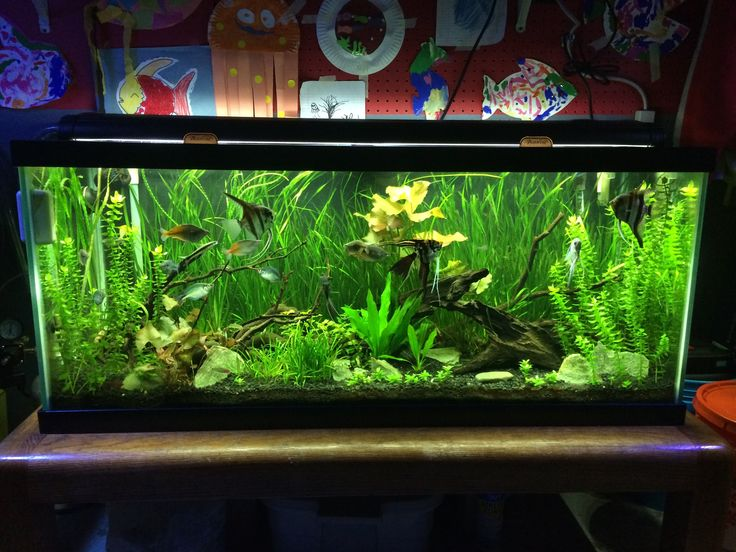 5 aquarium plants for beginners jungle val dwarf lily for Saltwater fish tanks for beginners