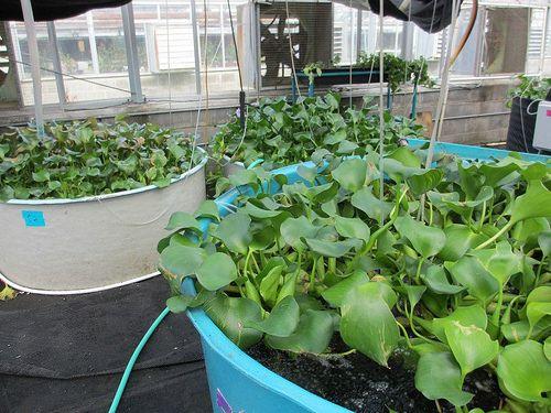 Aquaponics Garden Tips and Tricks: Was ist ein Aquaponik Garten? http://aquaponic-tips.blogspot.co.at/