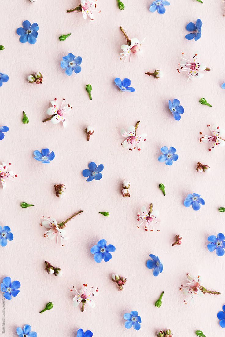 Flower background by Ruth Black for Stocksy United