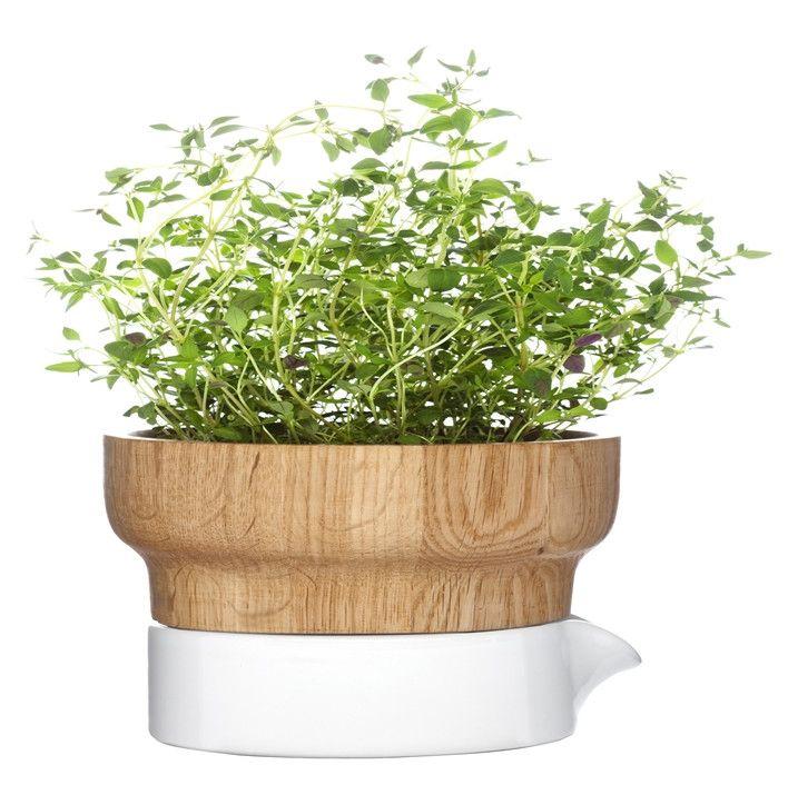 Kitchen Bench Herb Garden: 47 Best Images About A Little Herb Garden On Pinterest