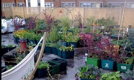 24 best rooftop food gardens images on pinterest. Black Bedroom Furniture Sets. Home Design Ideas