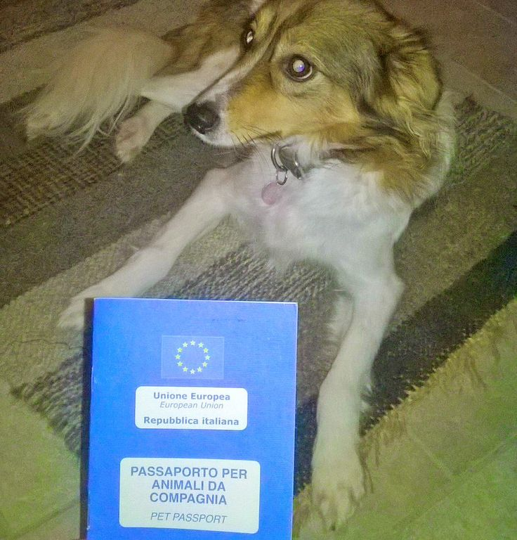 #EverydayEurope A passport for travelling with your pet within the EU http://ec.europa.eu/food/animal/liveanimals/pets/qanda_en.htm …