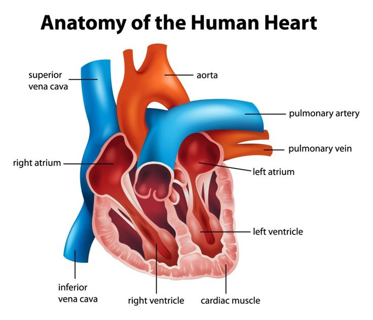 10 best What Are The Symptoms Of Heart Disease In Women? images on ...