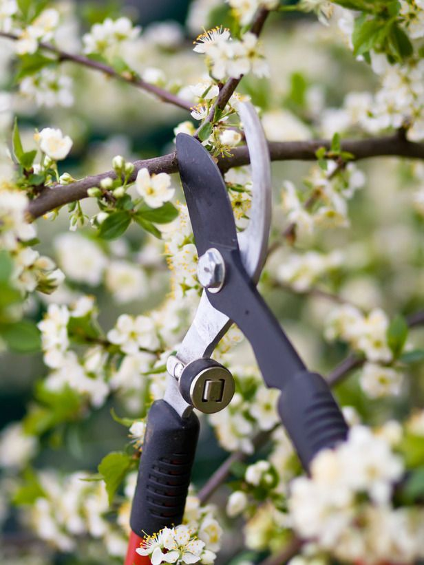 How to Prune a Tree : Outdoors : Home & Garden Television
