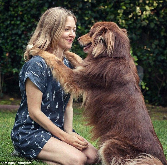 The other love of her life: Seyfried dotes on her Australian Shepherd Finn who shares her rural upstate New York home with her