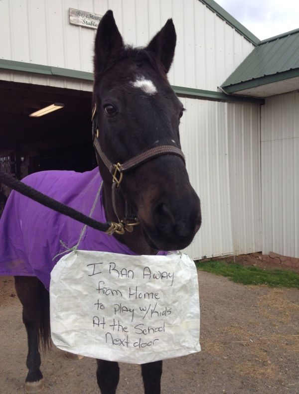 My Horse, The Escape Artist… presented by Five Star Tack | Horse Junkies United
