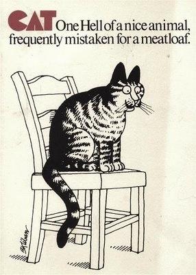 18 Best KLIBAN CATS Images On Pinterest