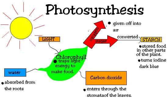 Photosynthesis is the process where algae and plants use