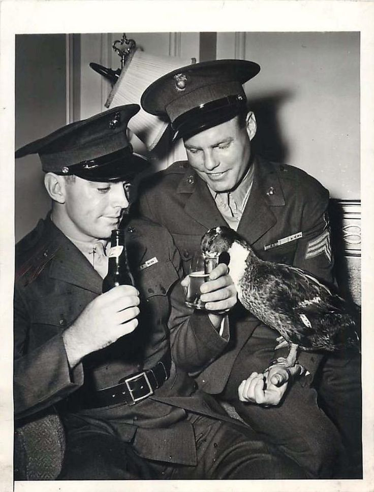 1944- Siwash, a duck, was the mascot of the First Battalion of the Tenth Marine Regiment and later the entire Second Marine Division during World War II. He went ashore with the Marines at the Battle of Tarawa in 1943. There he was cited by fellow Marines for fighting a Japanese-owned rooster. The January 17, 1944 issue of Life magazine quotes the citation: For courageous action and wounds received on Tarawa, in the Gilbert Islands, November 1943. With utter disregard for his own personal…