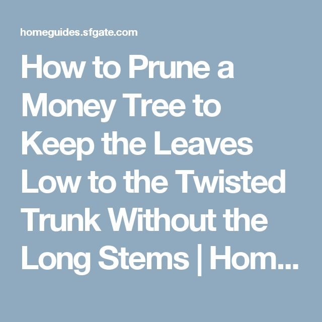 how to take care of money plant at home