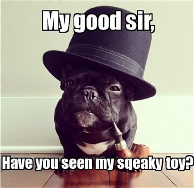 13a192ed464a5ab6f9de89215d935854 like a sir like a boss 203 best dogs in hats images on pinterest doggies, cutest animals