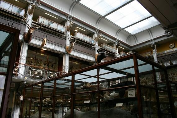 Natural History Building in Dublin