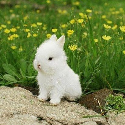 48 best images about Cute Baby Bunnies on Pinterest ...