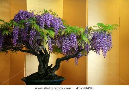 Bonsai Beauty... Awesome!