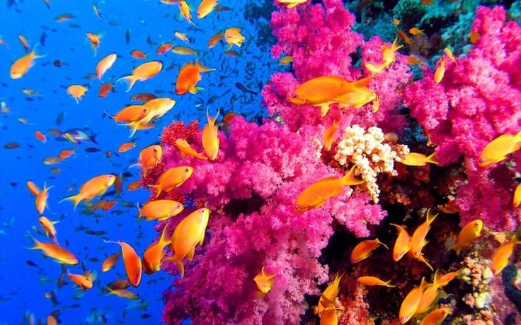 Coral Reef Pictures   Ocean Coral & Coral Reefs in 2020 ...