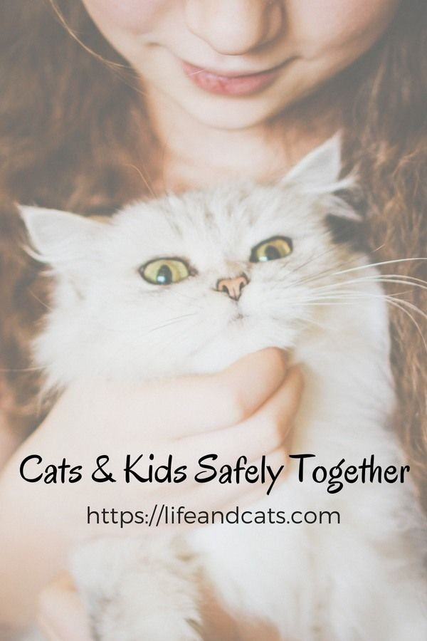 Can Kids And Cats Live Together Safely Kitten Care Cat Kids Cats And Kittens