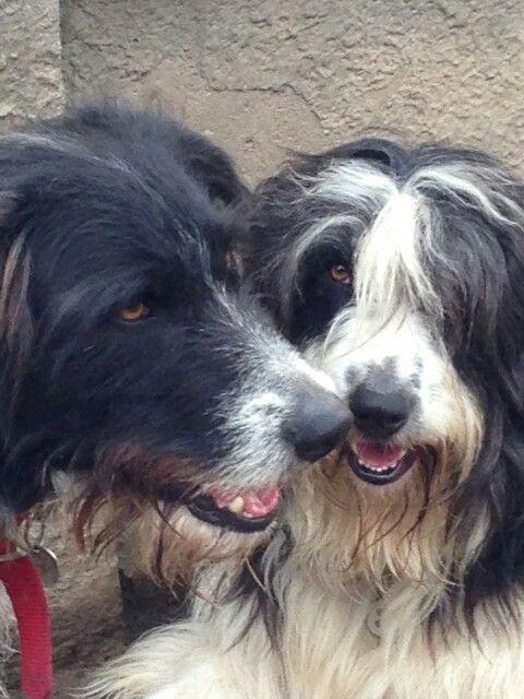 Benny&Lexxy