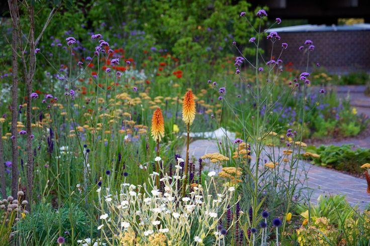 Kniphofia, Verbena, Achillea millefolium, Lychnis coronaria 'alba' at The Barbican | Nigel Dunnett