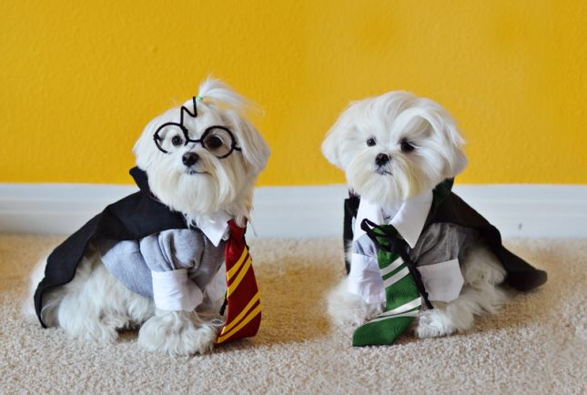 Dress your pups up as Harry Potter or other Hogwarts wizard students with this DIY Halloween dog costume idea.