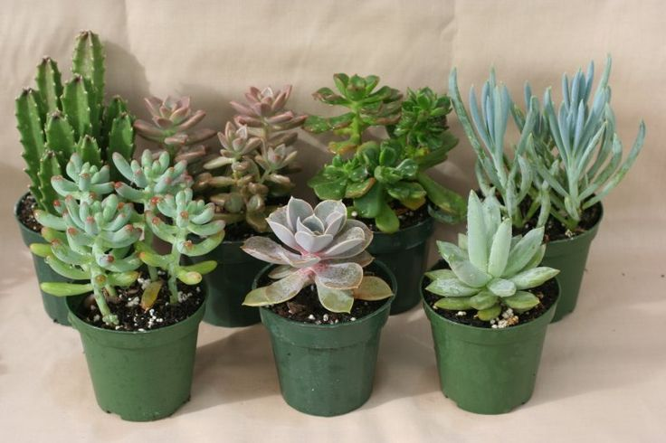 Have some cute little succulents in sweet pots by every window