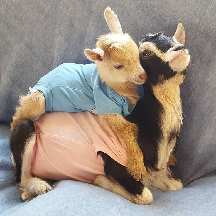 Photo by @goatsofanarchy