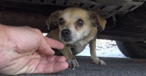 Αυτό το σκυλάκι είχε χαθεί για πέντε μέρες - Δείτε τη συγκινητική στιγμή της επανένωσής του με τον ιδιοκτήτη του (Video) | ΤΟ ΠΟΝΤΙΚΙ