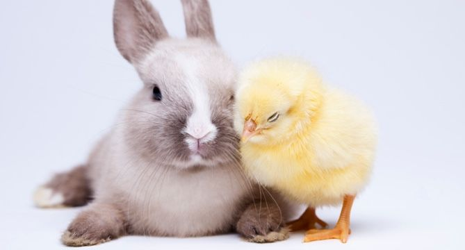 The Top 10 Cruelty Free Cosmetic Brands