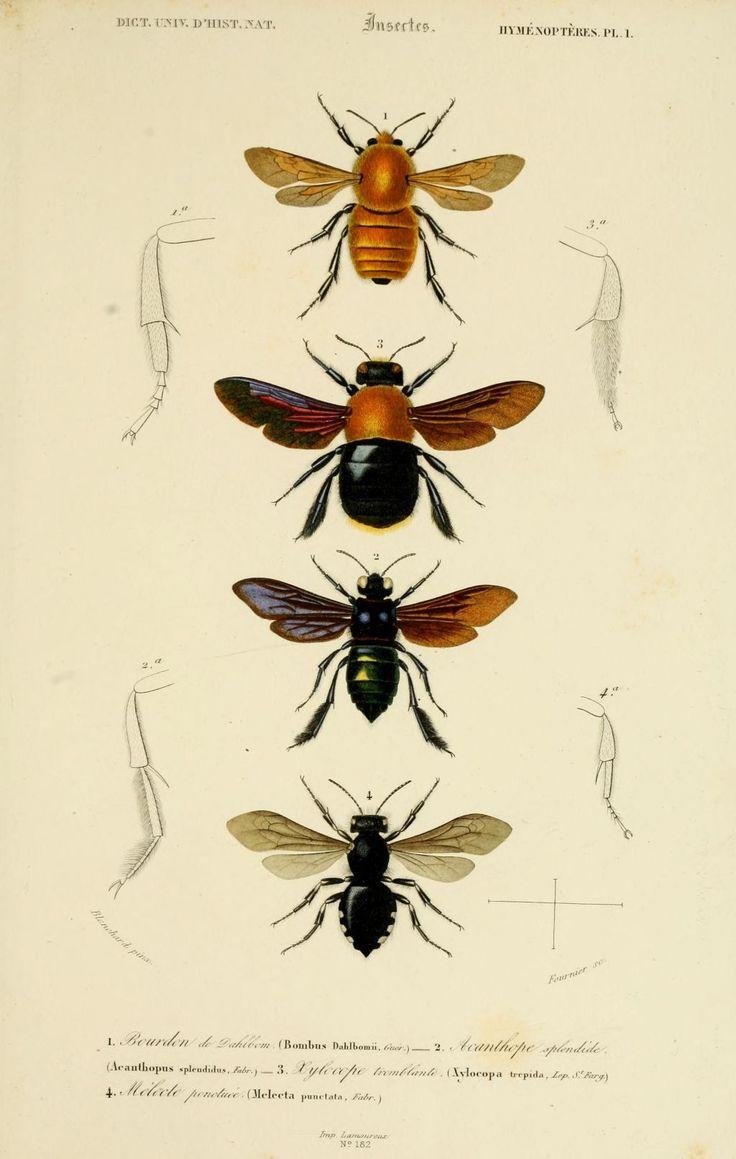 Les 25 meilleures id es de la cat gorie tatouage abeille vintage sur pinterest images miel - Tatouage larme signification ...