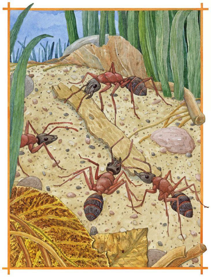 Картинки о муравьях и муравейниках