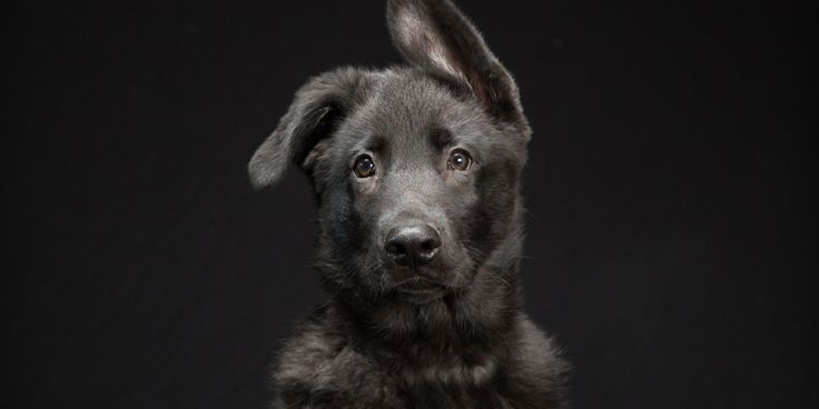 черные собаки - Cerca amb Google