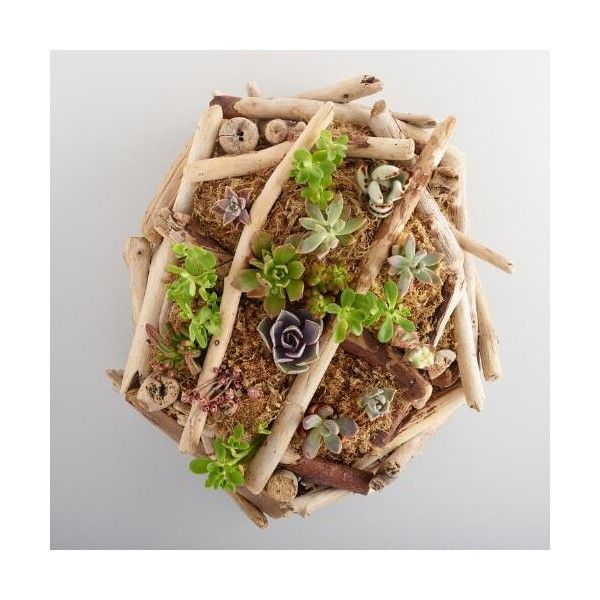 Cost Plus World Market Live Succulent Wall Art ($75) ❤ liked on Polyvore featuring home, home decor, wall art, driftwood home decor, cost plus world market, succulent wall art, handmade home decor and succulent planters