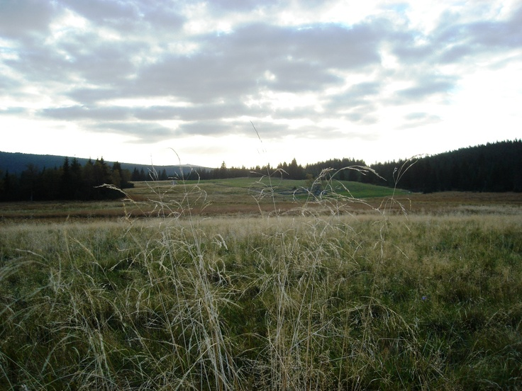 vítr v trávě