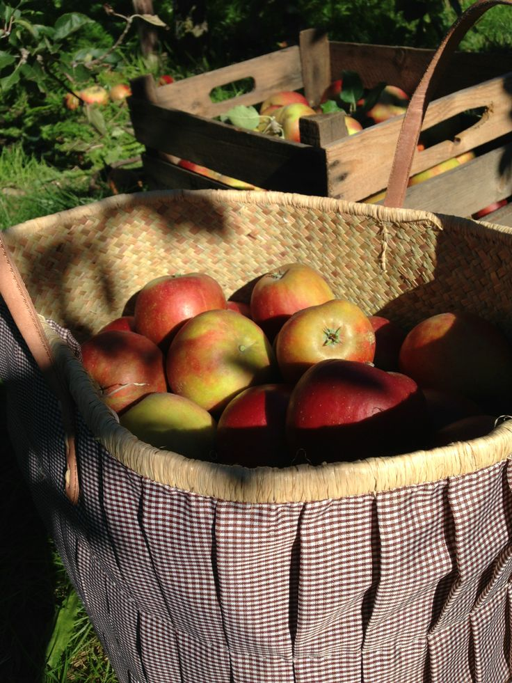Get your apples at Altes Land.