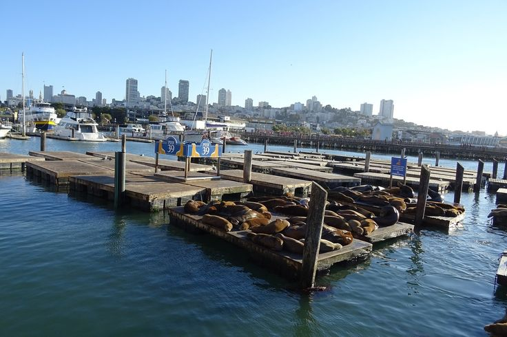 Fisherman's Wharf och Pier 39 #San #Francisco #SanFrancisco #USA #America #Fishermans #Warf #FishermansWarf #sea #lion #sjölejon #Pier39 #California #Kalifornien