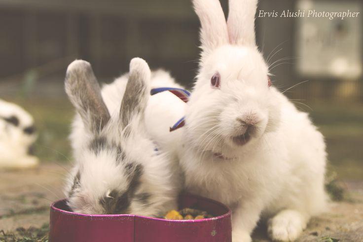 Cute Little Bunnies